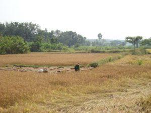 Die Idylle täuscht - das Leben auf dem Lande ist in Indien hart  (Foto: greenap)